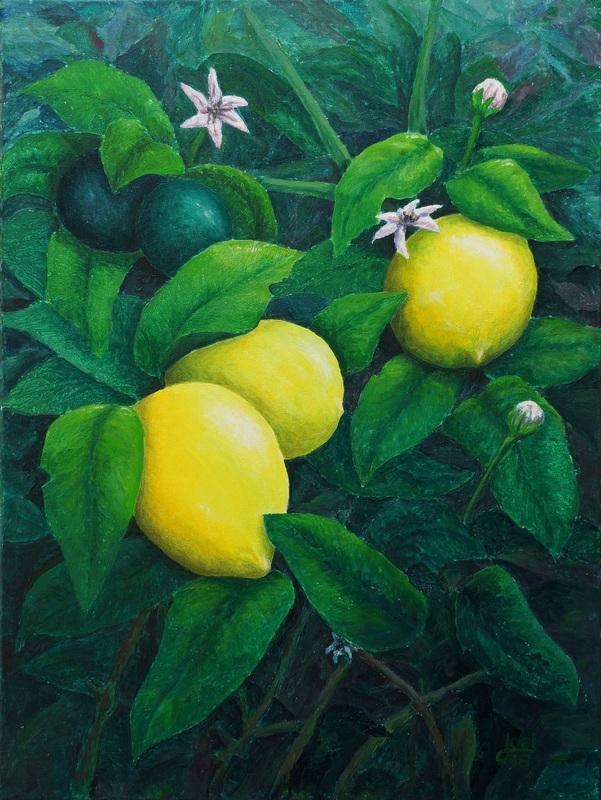 105) Zitronenbaum 2 (Acryl auf Leinwand 60 x 80 cm)